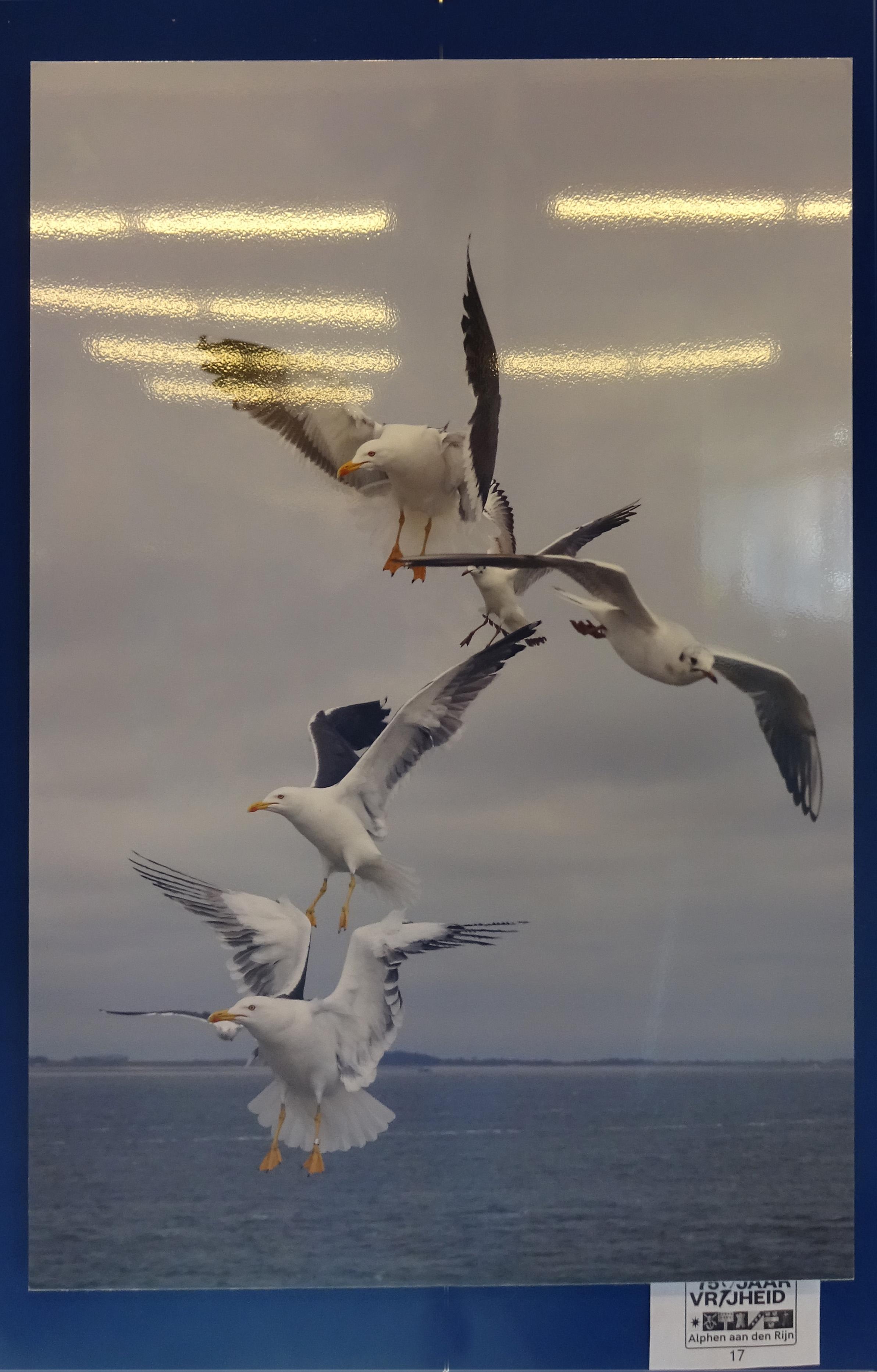 Vliegen-op-vleugels-door-Peet-Hiddink