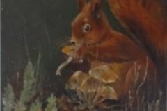 Eekhoorn Gerrie Hooftman