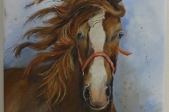 Paard Gerrie Hooftman